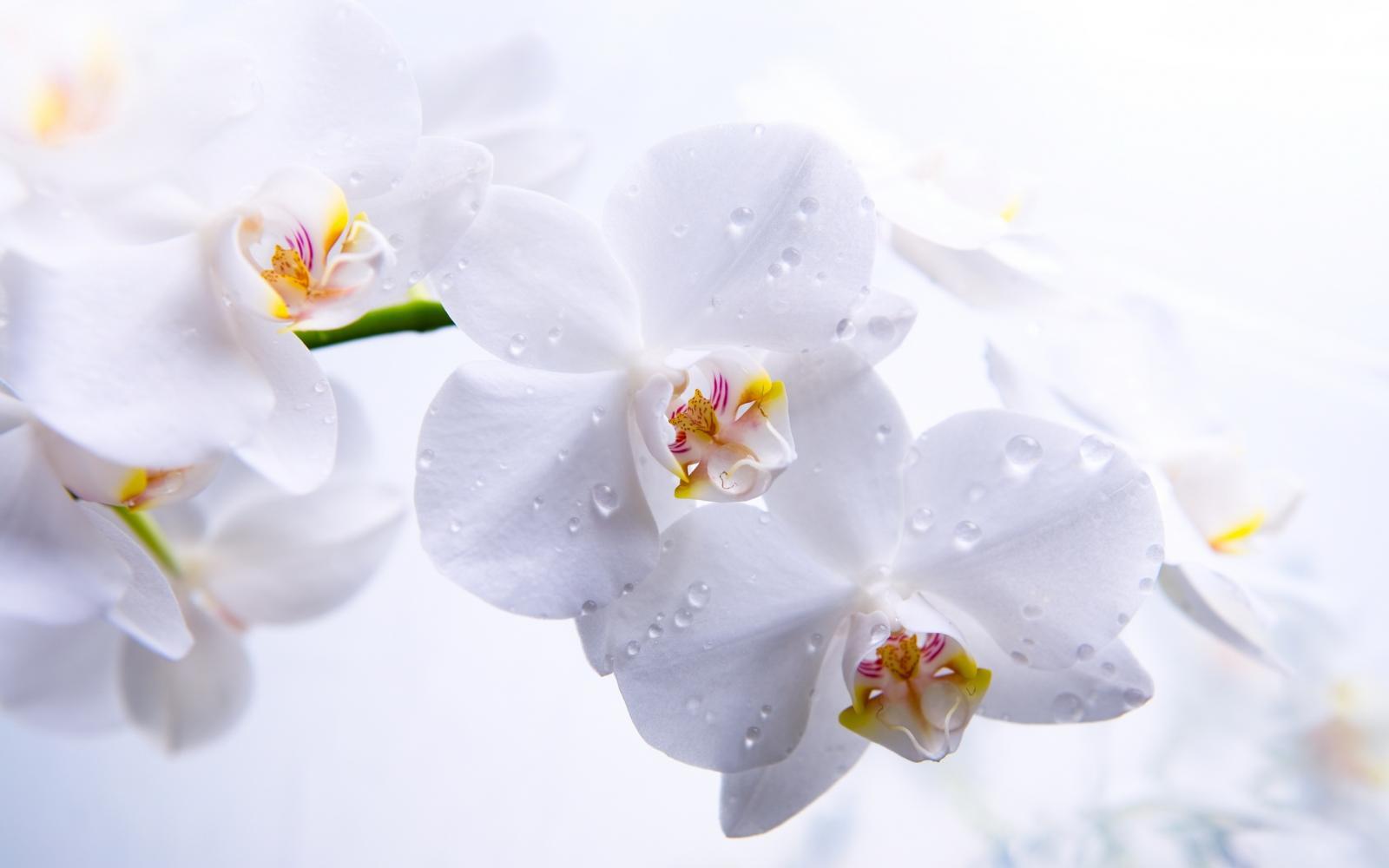 Фотообои с белыми цветами